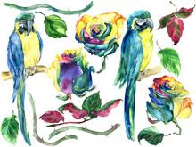 Set Of Flower, Parrot, Leaves ...