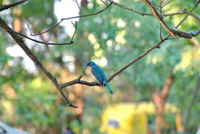 Blue And Yellow Tanager Perchi...