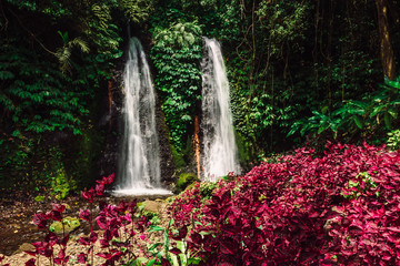 Fototapeta Wodospad Jungle waterfalls cascade in tropical rainforest with pink plants