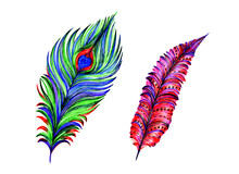 Two Exotic Stylized Peacock Fe...