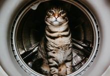Closeup Of A Cat Sitting Insid...