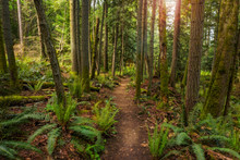 Pacific Northwest Forest Trail...