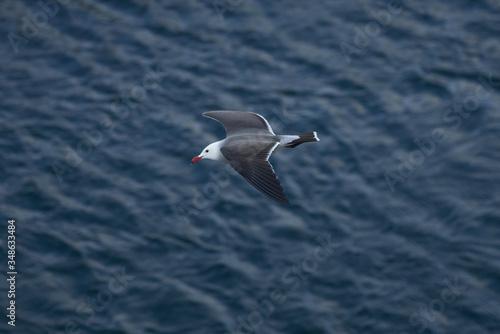 Fotografija Seagulls and Albatross flying top view over ocean