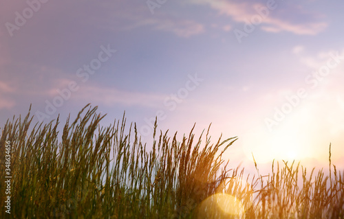 Obraz art abstract  summer background with fresh grass against sunset sky background - fototapety do salonu