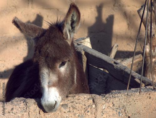 Photo Donkey In Pen