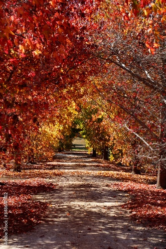 Fototapety, obrazy: Walkway Amidst Trees In Park During Autumn