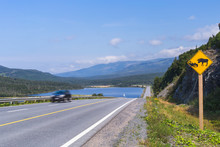 Sign Warning Of Moose Hazard, Gros Morne National Park, Newfoundland And Labrador, Canada