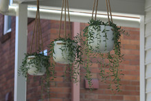 Three White Hanging Planter Pots With Hanging Plants On A Front Verandah