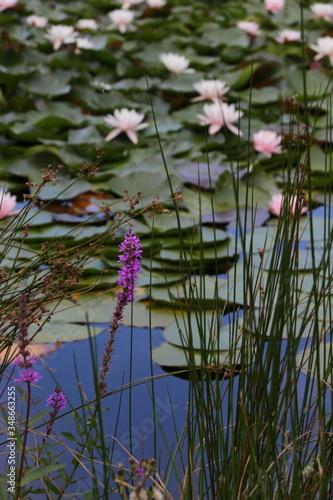 Photo plantes de bassin