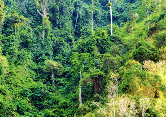 jungle nature green background