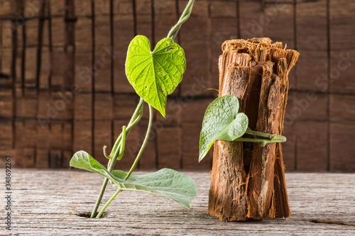 bark of medicinal plant cat's claw, uncaria tomentosa Canvas Print