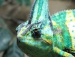 Close-up Of Chameleon Outdoors