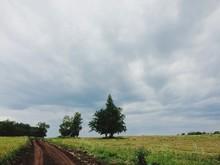 Dirt Road In Green Landscape