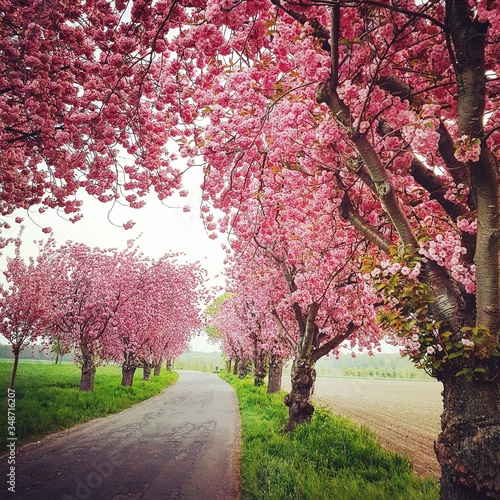 Fotografering View Of Cherry Blossom Trees In Park