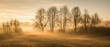 Fog Over Field With Trees And ...