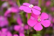 canvas print picture - Close-up Of Pink Flowering Plant