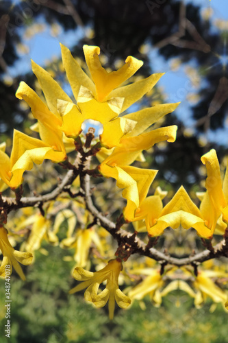 Valokuvatapetti yellow artisanal flowers on branches art effect of bifurcation reflection of the