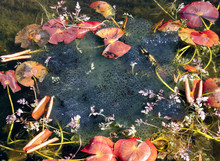 High Angle View Of Lily Pads In Swamp