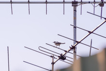 A Bird Standing On A Televisio...
