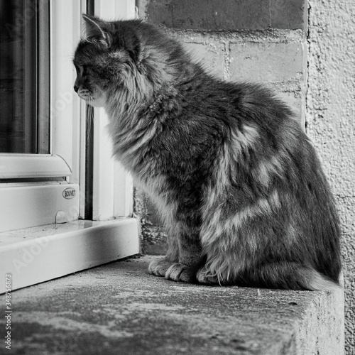 Fototapety, obrazy: Close-up Of Cat On Window Sill