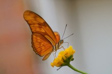 Extreme Close-up Of Butterfly On Flower In Park