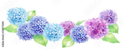 並ぶカラフルなアジサイ。水彩イラストのトレースベクター Fototapete