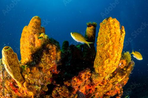 Coral Reefs Fotobehang