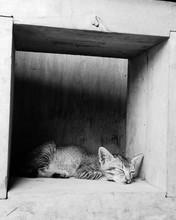 Kitten Sleeping In Niche On Wall