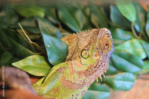 Canvas Print Close-up Of Lizard On Leaf