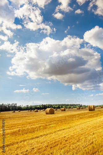 Obraz na plátne blue sky with little clouds, green forest and yellow ricks of hay