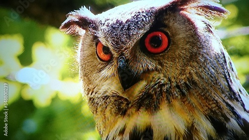 Close-up Of Alert Eagle Owl Canvas Print