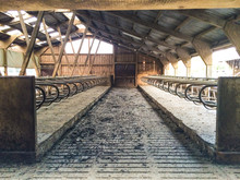 Empty Cow Shed