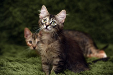 Two Cute Kittens On A Green