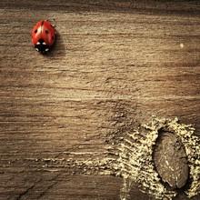 Close-up Of Ladybug On Wooden Surface