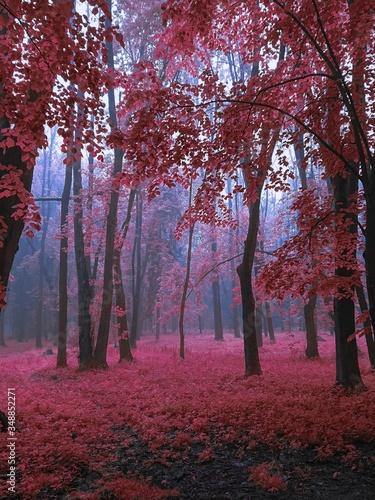 Magical autumn in the foggy park - 348852271