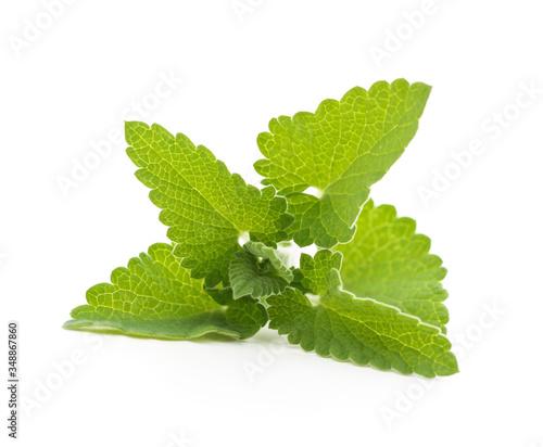 Fototapeta Fresh lemon balm leaves. obraz