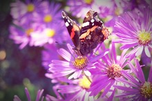 Close-up High Angle View Of Butterfly On Flower