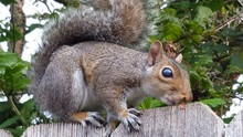 Close-up Of Squirrel Sitting O...