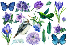 Summer Set Of Watercolor Drawings, Leaves, Blue And Purple Flowers, Blueberries, Butterflies, Hummingbirds And Kookaburra On An Isolated White Background