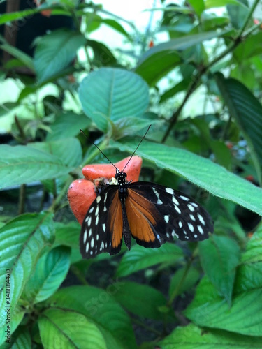 Orange & Black Butterfly on Flower with Leaves