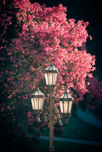 Street Lamp Against Tree With ...