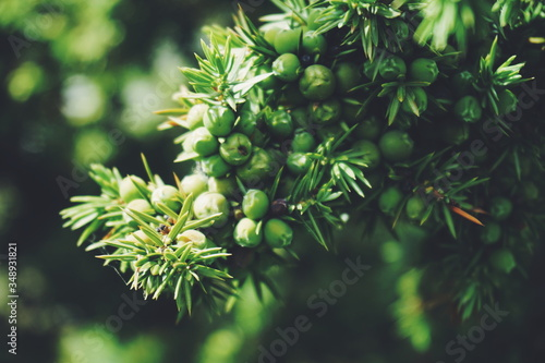Close-up Of Fruits On Tree Fototapet