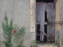 Plants By Old Broken Wooden Door