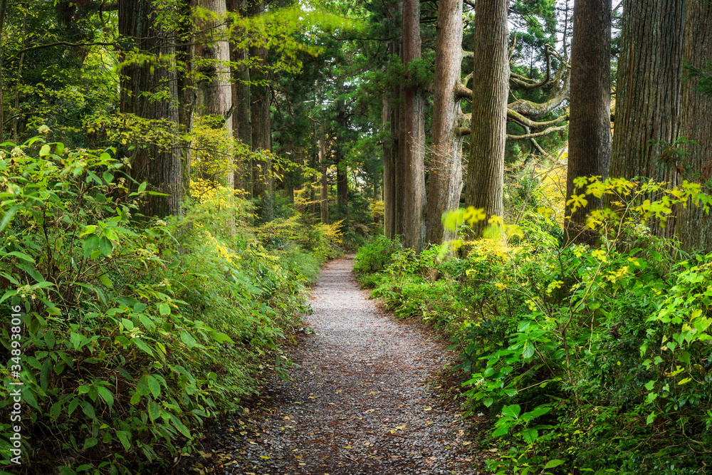 Fototapeta Forest path in the wilderness