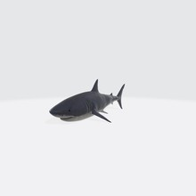 3d Illustration Of Shark. 3d M...
