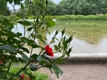 Rose Rosse Sulle Rive Di Un Laghetto In Una Villa Romana