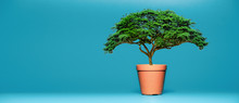 Big Green Tree, Orange Flower Pot, Blue Background. The Concept Is Used To Add Text.