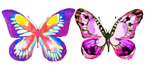 butterfly607