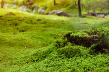 Closeup Of Ground And Tree Stump In Forest Covered With Green Moss