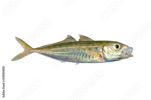 Fotografija Horse mackerel or scad fish isolated on white background